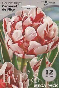 Tulip double Carnaval de Nice - 12 Bulbs Per Pack