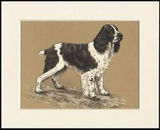 ENGLISH SPRINGER SPANIEL LOVELY DOG PRINT MOUNTED READY TO FRAME