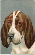 PORTRAIT DE CHIEN.  DOG. HUND.