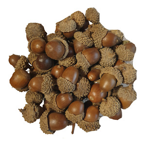 Acorn Nuts in Cap - Pot Pourri - Decorative - 200g Bag