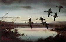 Pintails to Rest By Les Kouba Signed and Numbered Duck Print