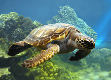 3 -d - Cartolina: Tartaruga di mare - Sea Turtle - Tortoise