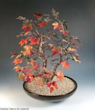 "RARE BOVANO Vintage 14"" Enamel on Copper BONSAI Maple Tree Sculture FALL COLORS"