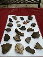 Celtic + fragmentos de cerámica romana Greyware Samian Ware (patrones) #14 concha de ostra