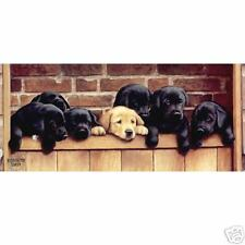 Nigel Hemming SEVEN UP Labradors Puppy Pups Puppies