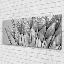 Impression sur verre Image tableaux 125x50 Floral Pissenlit