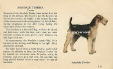 Airedale Terrier Dog Rare Vintage Art Drawing Breed Description From 1939