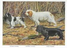 Cocker / Clumber / Field Spaniel - 1927 Color Dog Art Print - Matted