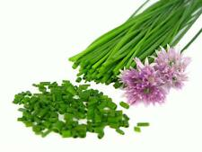 150 CHIVES 2021 (all non-gmo heirloom vegetable seeds!)