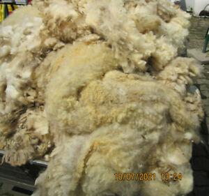 Schafwolle, Rohwolle, unsortiert, ungereinigt, naturbelassen, ca. 1 kg, #1