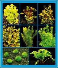 Aquarienpflanzen-Set für ein Kaltwasser- / Zimmer-Aquarium,  16-22°C bis 60L