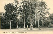 Carte EU La Forêt Les Grands arbres De belles dames en promenade