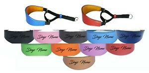 Greyhound Whippet Leather Padded Dog Collar Personalized Name Martingale Collar