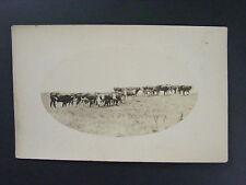 Cattle Ranch Farm Cows Real Photo Postcard RPPC c1910