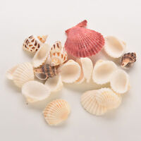 Sea Shells Shell Craft Aquarium Beach SeaShells Mixed Randomly Gift US
