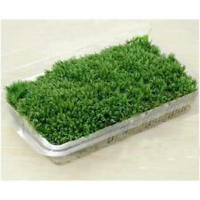 Hot Sale 100% Natural Forest Carpet Moss For Terrarium Decoration