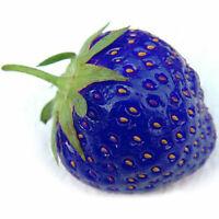 Natural orgánico Planta nutritiva 100pcs Semilla nueva Semillas de fresa azul