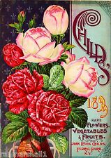 1899 Child's Rose Vintage Flowers Seed Packet Catalogue Advertisement Poster