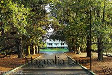 Golf  Poster/Photo - Magnolia Lane Augusta National/4x6 inches