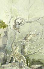 MORITZ PATHÉ - Gepard und Schimpanse - Aquarell um 1920