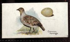Tobacco Card, Lambert Butler, BIRDS EGGS, 1906, Common Partridge, #32