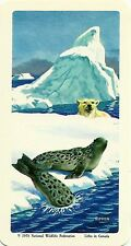 RED ROSE TEA CARD, SERIES: THE ARCTIC, RINGED SEAL