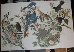 Hawk/Turtle Dove/Cat Bird/Jay: 4 cutout prints from THE AUDUBON FOLIO