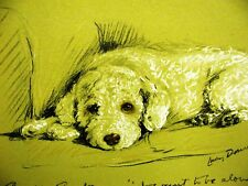 Lucy Dawson 1937 WHITE FLUFFY POODLE Dog Print Matted