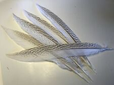 5 x 30-35cm Silver Pheasant Tail Feathers DIY Craft Millinery Vase Home Decor