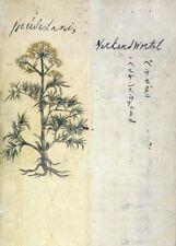 """Peucedanum """"Un Japonais à base de plantes"""" 17th Century plant Anatomy Poster"""