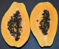 Carica papaya Kamiya | Laie Gold | Golden Hawaiian Papaya | 100_Seeds