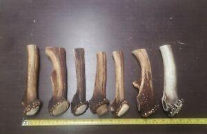 LOT 7 x European Elk - Red Deer Antler Cuts w Burr For Handles Crafting Nr. 1321