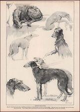 Scottish Deerhound Dogs, scenes by B. Branfoot, vintage print,1935