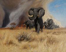 Kuhnert Wilhelm Friedrich Elephants Print 11 x 14   #4583