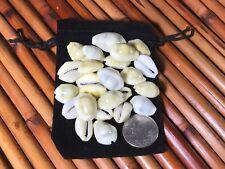 25 Money Cowrie Cowry Shells Seashells Drawstring Pouch Free Ship Lot# 0820