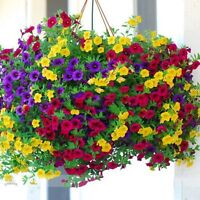 1 Pack 100 Mixed Petunia Seeds Heirloom Hanging Petunia Garden Flowers S048