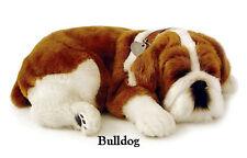BULLDOG - Il cucciolo che respira - PERFECT PETZZZ