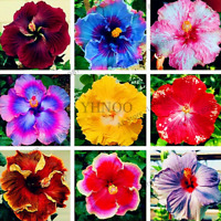 100 PCS Seeds Giant Hibiscus Bonsai Flowers Plants Perennial Free Shipping 2019