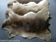 Fallow deer skin fur winter coat taxidermy rug hide collectible luxury decor