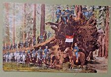 New listing Postcard Us Calvary Mariposa Big Tree Grove Yosemite Flag Horse1909 Bellingham