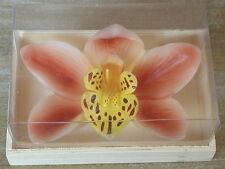 Kerze Orchidee, Blume, Blüte, Dekoration, Schwimmkerze, Natur in schöner Holzbox