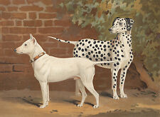 Early Bull Terrier Dog & Dalmatian Dog Antique Dog Lithograph 1881