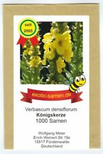 Großblütige Königskerze - Verbascum densiflorum - 1000 Samen