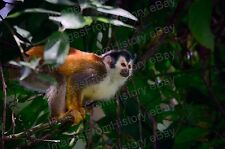 20x30 Poster Incredible White-Headed Capuchin Monkey Central America #WFM