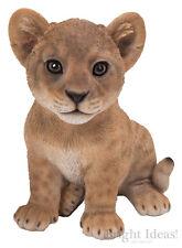 Vivid Arts-Pet Pals Fauna Selvatica Animale Domestico & LION BOX-LION CUB
