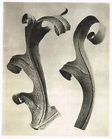 Original Vintage Botanical Karl Blossfeldt Photo Art Print 109