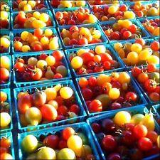 Tomato Rainbow Cherry Mix 25 SEEDS Organic Vegetable Heirloom Colorful Assorted