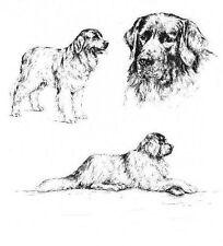 Newfoundland - 1963 Vintage Dog Print - Matted *