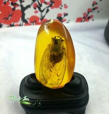 Natural amber pendant cicada real insect specimens hanging pendants sweater chai
