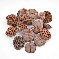Dried Lotus heads medium seed pods 7 -9 cm diameter Pack of 20